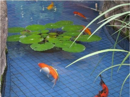 Oc pond fountain service gallery of koi ponds garden for Koi pond builders orange county