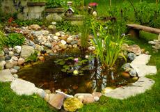 Santa Ana Koi Pond Design