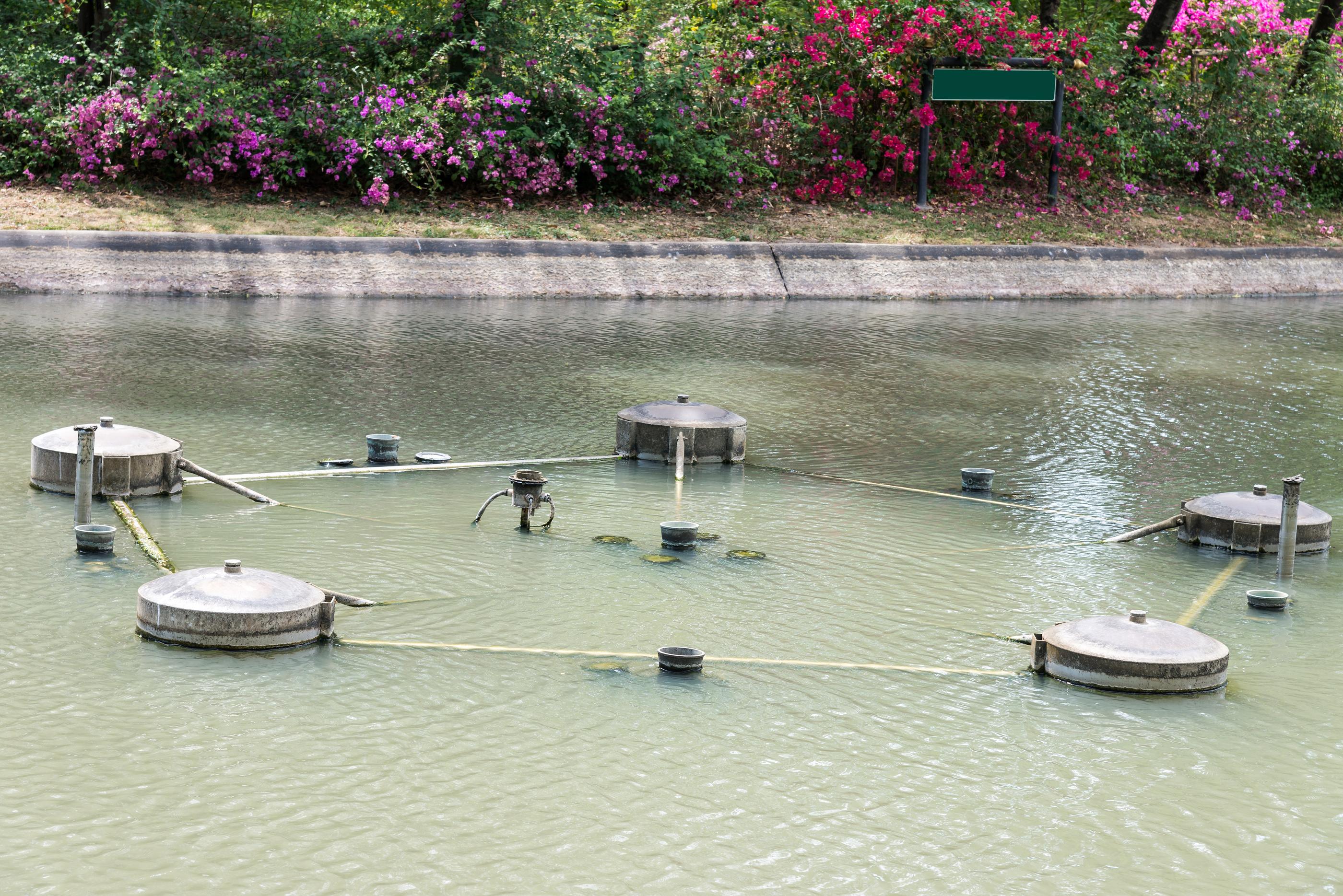 Orange county pond service blog for Pond service